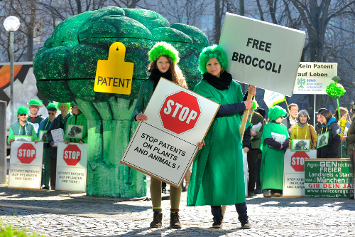 Free broccoli / (c) Thomas Einberger/argum